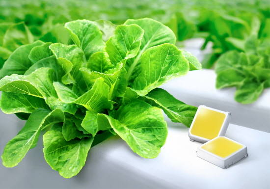 LED 식물 재배 활성화하나…삼성전자, 업계…