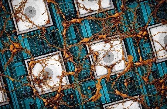 삼성전자, '뉴로모픽 반도체' 기술 선점 나섰…